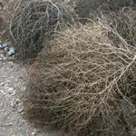 tumbling tumbleweed!